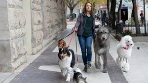 Egy kutya négy útja háttérkép